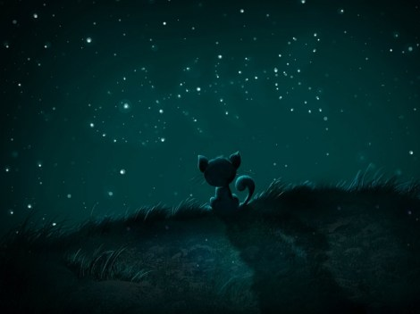 cat-stars-night
